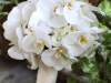 White Elegance - Phalaenopsis orchids for a wedding at the Historic Londontowne & Gardens